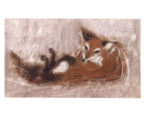 Reclining Red Fox Watercolor And Pastel  1 4 In Gift Of Elaine L Jacob Photograph Daniel Sperry